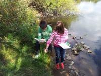 Pflanzenbestimmung in der Uferzone
