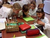 Klasse 6: Experimente zum N�hrstoffnachweisen